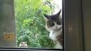 Кот в шоке · coub коуб