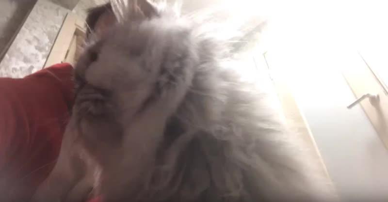 Ответ ветеринара: Стерилизованная кошка много ест. Как правильно кормить?