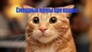 Смешные мемы про кошек