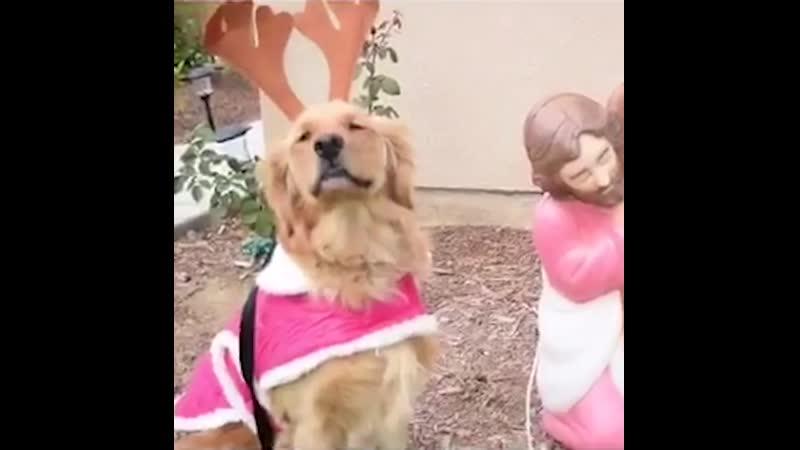 Хранители верности doggii