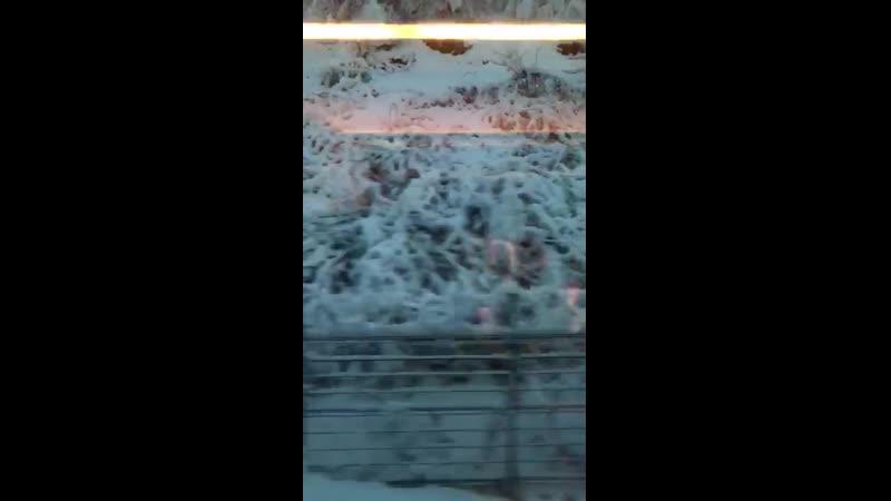 VIDEO-2019-12-04-08-18-02.mp4