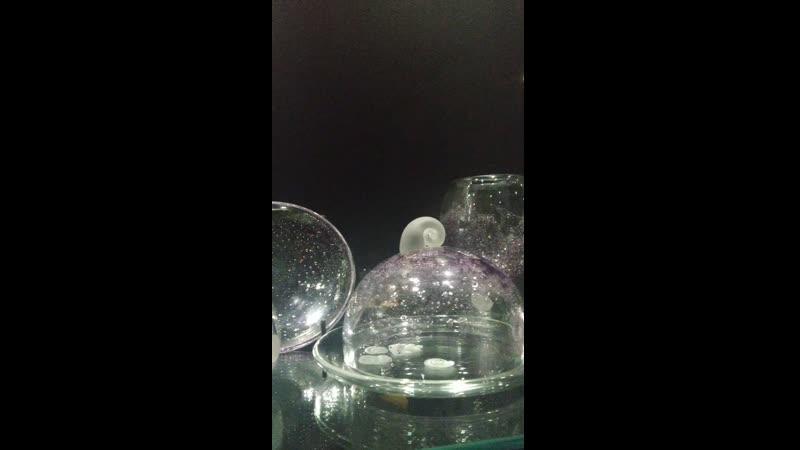 Экскурсия Лёд рождённый в огне Чёрный зал Музея художественного стекла
