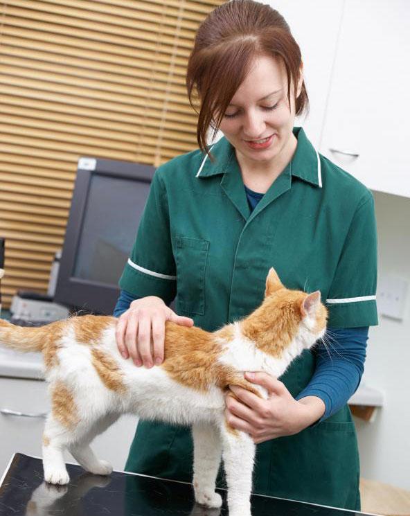 Ветеринарные неврологи специализируются на нервной системе животных.