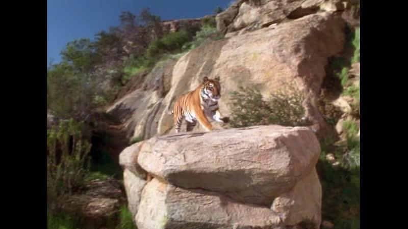Книга джунглей История Маугли The Jungle Book Mowglis Story 1998