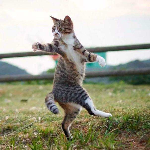 Если бы кошачье мурлыканье продавалось в таблетках, фармацевтический рынок получил бы идеальное средство против депрессии. Алексис Ф.