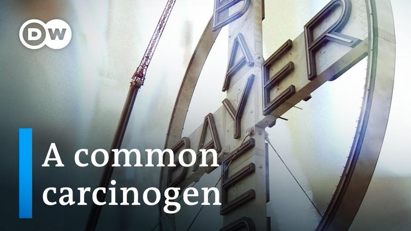 Turning toxic the Bayer Monsanto merger DW Documentary