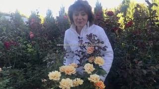 Лучшие сорта Роз: Гольдэльзе (высокая) / питомник Елены ИВАЩЕНКО