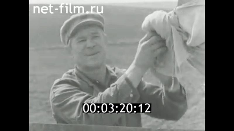 1976г совхоз Россошинский Калачёвский район Волгоградская обл