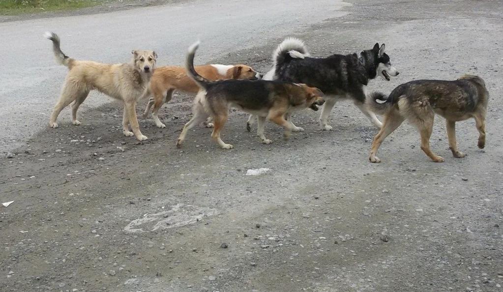 МКУ «Благоустройство» информирует об отлове бродячих собак