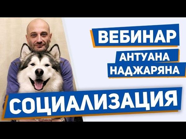 Социализация собаки Обучение поведению в человеческом обществе