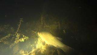 Кто живет на дне пруда. Подводная охота онлайн.