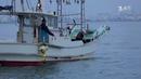 Япония смертоносная рыба фугу и город роботов Мир наизнанку 2 серия 9 сезон