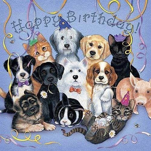 эверхарт картинки животных для поздравления с днем рождения ресторана является веранда