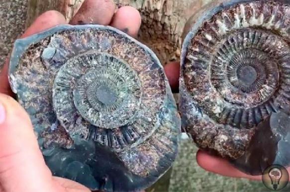 Британский студент обнаружил существо возрастом 185 млн лет