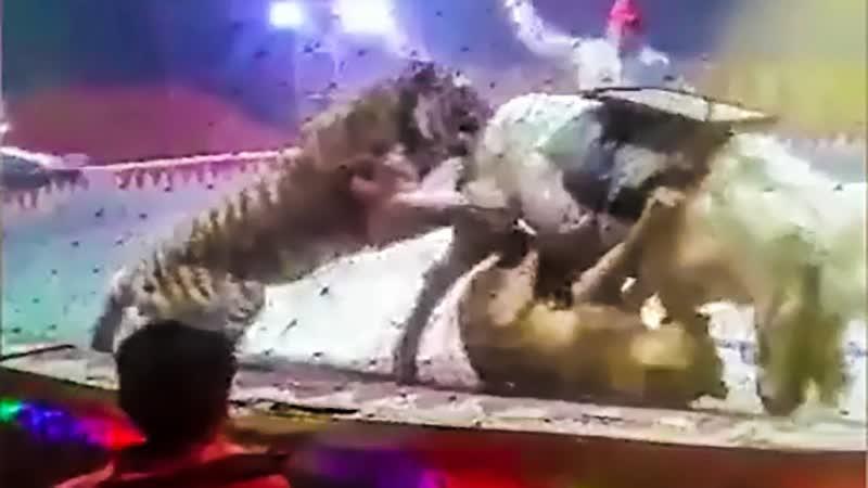Лев и тигр напали на лошадь на арене цирка