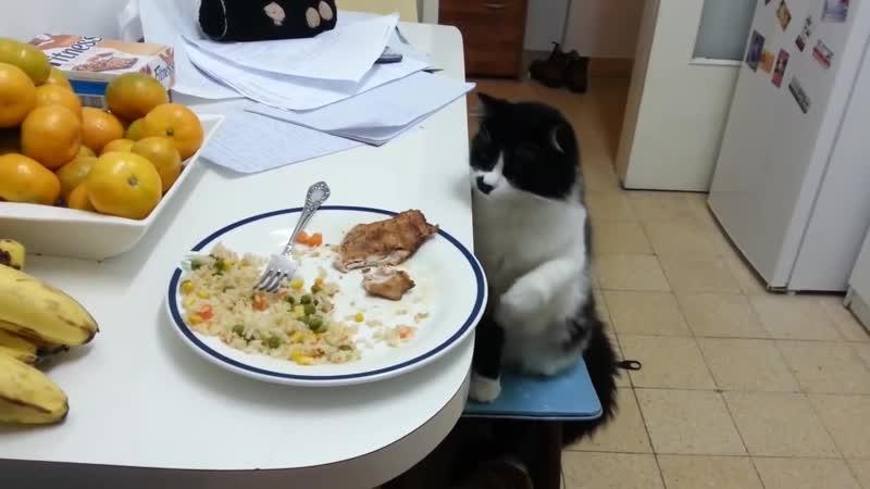 Смелый и решительный кот