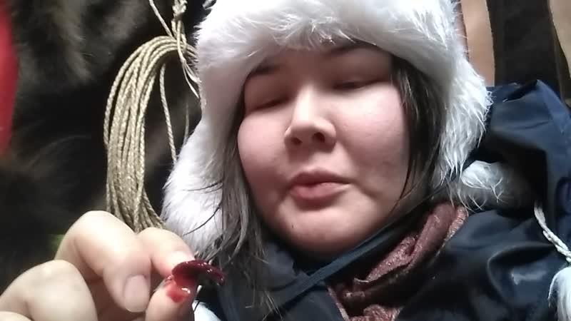 Журналист Новостей Югры ест сырую печень оленя и рассказывает какая она на вкус.
