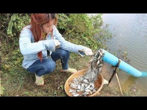 Croire Cette Pêche? Système Unique De Pi geage De Poissons Nouvelle Technique De Capture Du Poiss