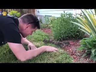Парень знакомится с кроликами, которые завелись на его участке