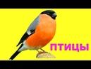 Учим голоса и названия птиц. Картинки для детей с птицами. Развивающие карточки Домана часть 3