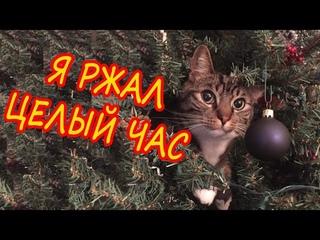 Я ржал целый час лучшие приколы с котами и кошками