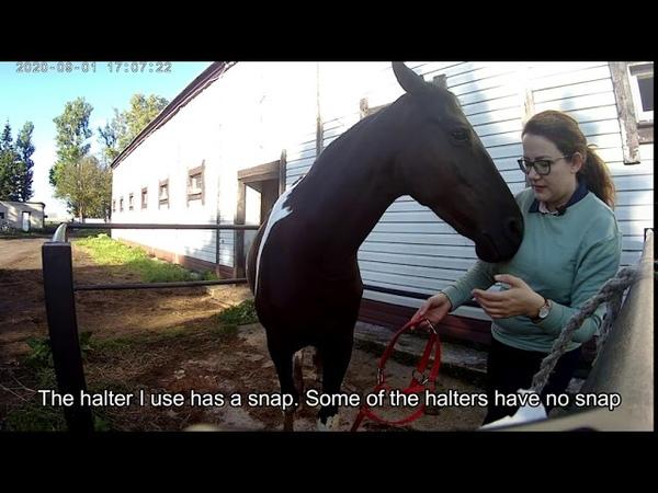 Уроки для начинающих Уход за лошадью Урок 1 Lessons for beginners Horse care grooming Lesson 1