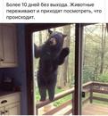 Алексей Абелардо фото №6