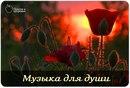Персональный фотоальбом Романа Ефимкина