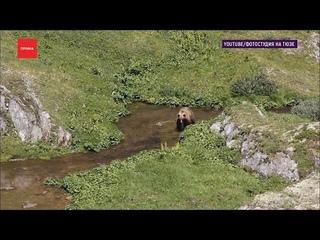 В Ергаках медведь снова загрыз человека