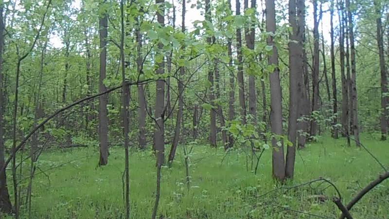 лес поход выживальщики ищут пидора абвгата