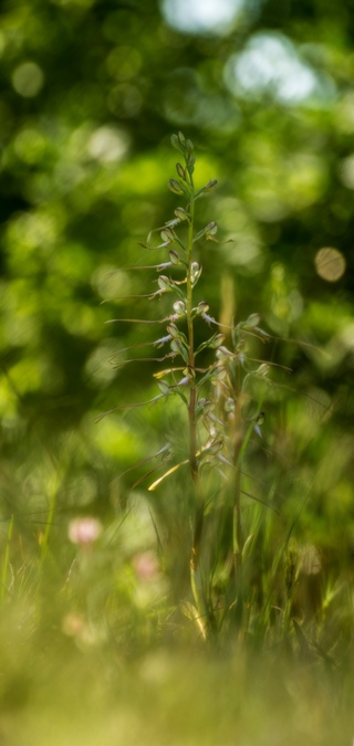 Орхидеи 2020