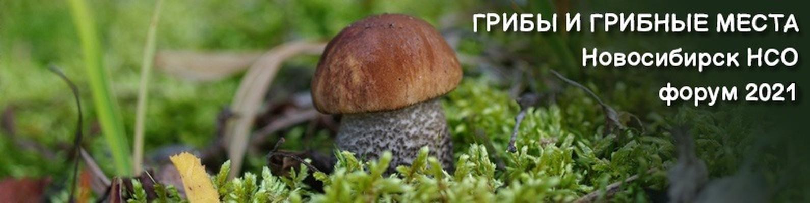 грибники ульяновской области 2021 грибы в контакте