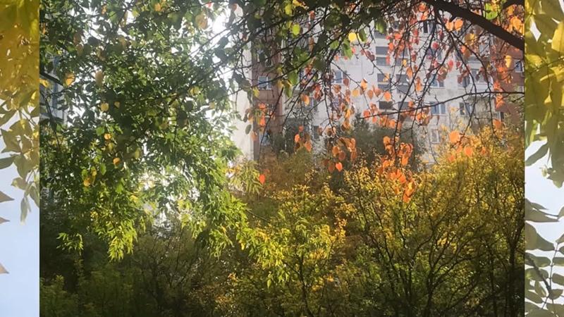 Московский дворик Золотая осень 2020