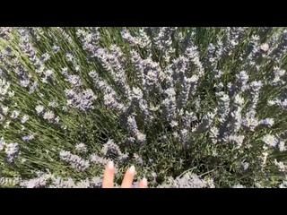 Видео от Анастасии Осокиной