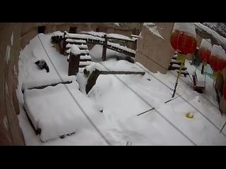 Панда дико радуется большому количеству снега