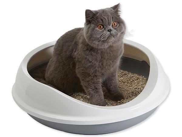 Если у вас скоро появится кошка, изображение №1