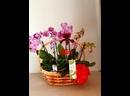 корзины орхидей под заказ