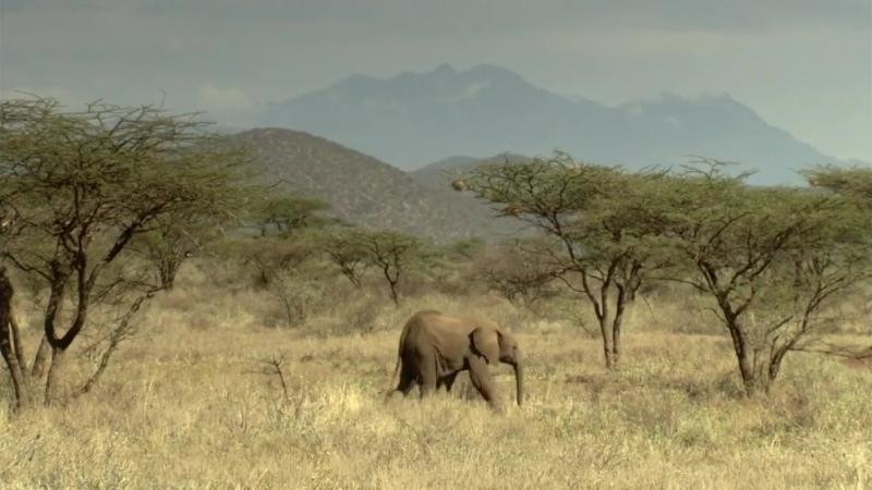 BBC Тайная жизнь слонов