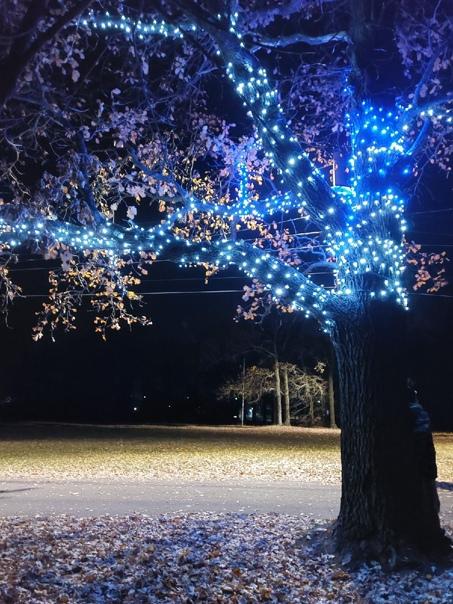 Светящееся дерево в Канашском паркеЗа фото спасибо...