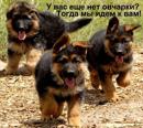 Фотоальбом Елены Ульк