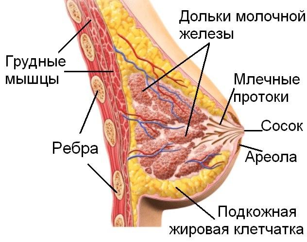 Тренировка груди — улучшаем форму., изображение №1