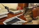 До слез смешные видео про кошек 720p