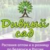"""Питомник растений """"Дивный сад"""""""