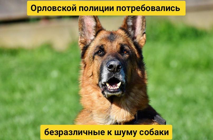 Орловской полиции потребовались безразличные к шуму собаки