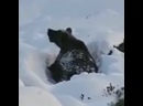 Охота на медведя в Якутии.