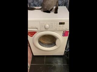 Ремонт стиральной машине «ЛЖ»