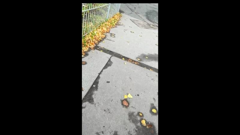 Видео от Елизаветы Чирковой