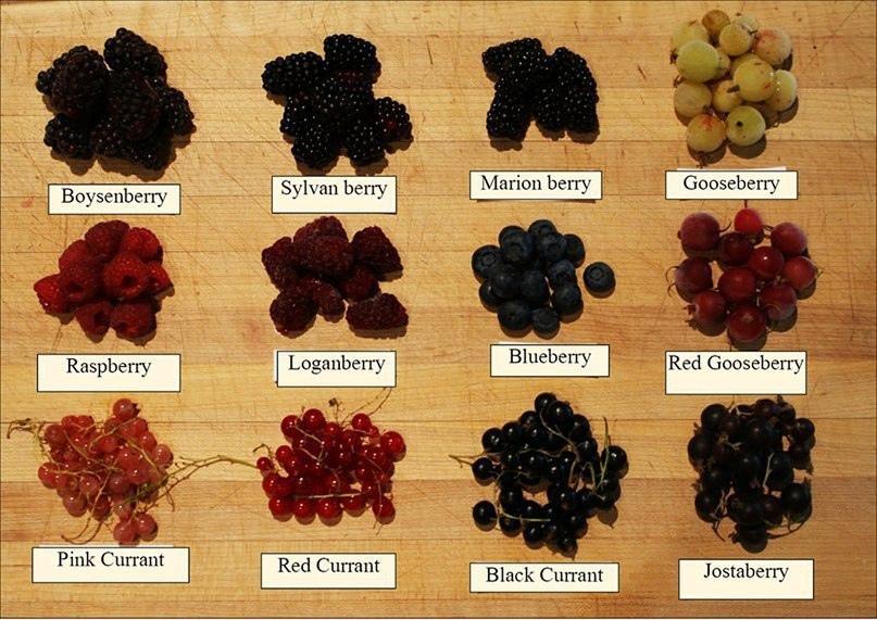Ягоды - berries: