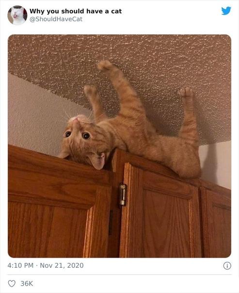 Twitter-аккаунт Почему вам нужно завести кошку (Why you should have a cat). Идеальный аккаунт для того, чтобы показать вашим родителям, почему вы хотите кошку. А для достижения этой цели в нём