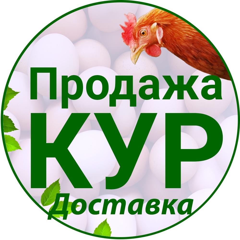 Афиша Продажа Кур несушек по Ярославской Области